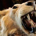 Las grandes aerolíneas de EE UU prohíben transportar trofeos de caza tras la muerte de Cecil http://t.co/QREkehiksw http://t.co/9icNS4VZCQ