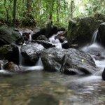 Grave impacto de la sequía en El Yunque http://t.co/YsAEnVxSv3 http://t.co/qeqDJySEXh
