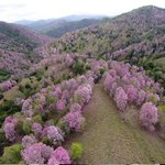 NO estás soñando ni es otro lugar... Es el área natural #LaRobleda en Jájome, Cayey -vía @ParaLaNaturalez http://t.co/yffNQ84HTx