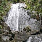 El Yunque es el más afectado por la sequía http://t.co/ukZGRS10A9 http://t.co/0LNT7koU7R