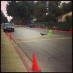 Schools do open later this month. Hopefully, they will use the crosswalk! @LAArboretum ^TL http://t.co/4er31qBXzr