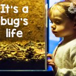 "Spend time with our weird and wonderful insects. CLICK HERE =>> http://t.co/VFRFenfzYM #aquarium #hull"" http://t.co/qrGdHGppgE"