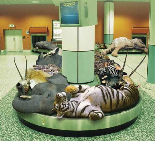 Congrats @Delta, @United, @AmericanAir on banning trophy hunting shipments #CeciltheLion http://t.co/qmvV62B3oe http://t.co/8wmoh5lnUz