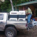Con acompañamiento del @CONAPgt, Arcas de Petén liberó a doce monos araña en la Biosfera Maya. Vía @calvarez_pl http://t.co/vFrktmdeub