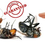 #pest #control #services in #bangalore, #pestcontrol #bangalore https://t.co/4ovO52ooDf http://t.co/3lG8hnU2qu