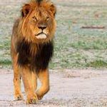 Stop the killings #zambia #lions #africa http://t.co/rkpqVhTveP