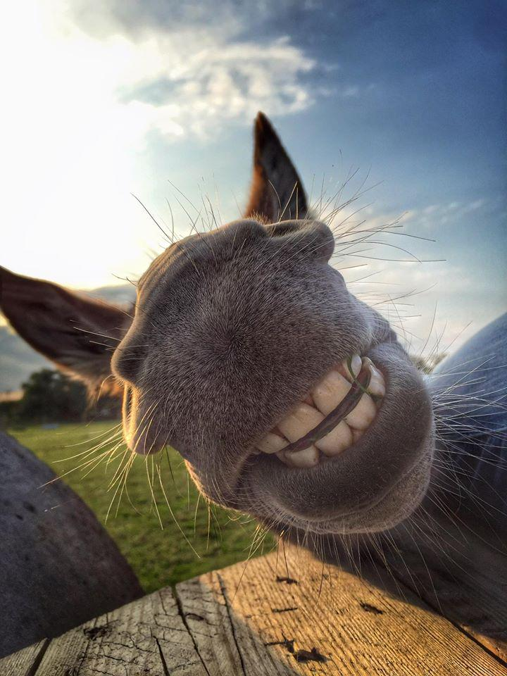 Goooood morning! Happiness is infectious; RT this super snap to spread some smiles today.  (Pic: Suzanna Edwards) http://t.co/BJAiRVOXp5