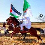 #فلسطين_قضيتي تحية من بلد المليون و نصف ملين شهيد #الجزائر إلى بلد الصمود و التحدي #فلسطين #Boy_Dz http://t.co/moIbWG3xyV