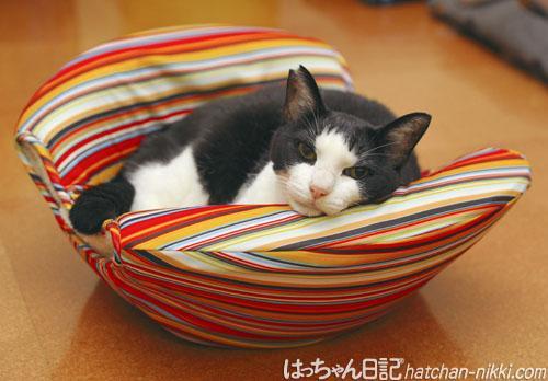 猫の巣であごのせにゃう http://t.co/601bVfCA30