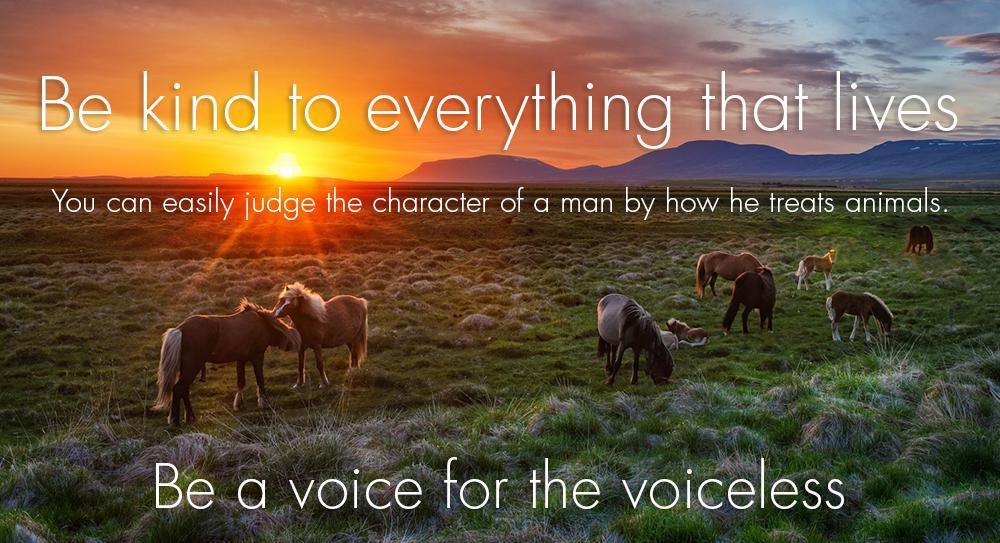 Be kind to everything that lives. #SaltRiverWildHorses #WildHorses #KIndness #Affirmations #Mantra #Love #Light http://t.co/7DXreaigK2