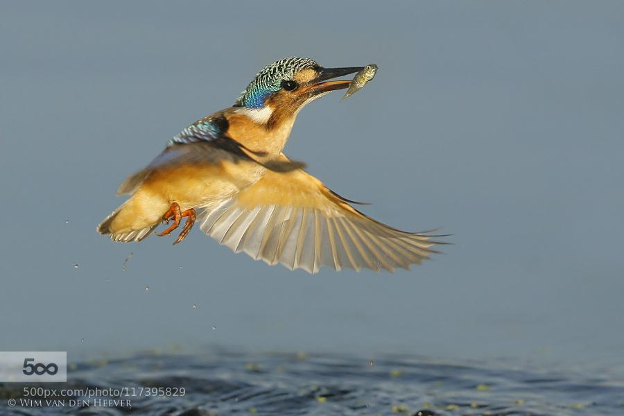 Popular on 500px : The Catch by WimvandenHeever http://t.co/LW2lP39Lfx