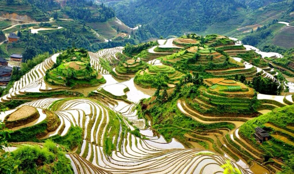 13 Remarkable Rice Terraces Around the World: http://t.co/xbW7hnCaM1 http://t.co/fKtyvg3c2w