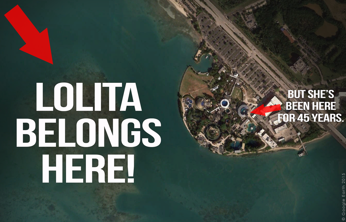 RT @peta: Over 260,000 actions have been taken by people to help #FreeLolita. Add your voice: http://t.co/kAjqy1VDI3 http://t.co/oz6PbE0QQV