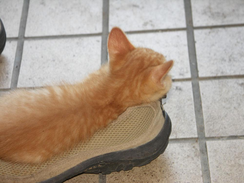 最近。靴がなま暖かいのは、おまえか。秀吉か。 http://t.co/33SVRJgiNA
