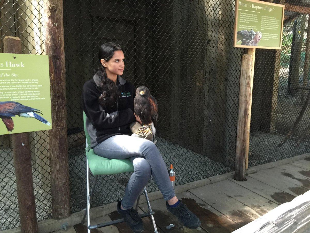 バンクーバーのキャピラノブリッジという観光名所では、飼ってるわけじゃない野生の鷹が遊びに来るらしい…。鷹超かっこいいよ鷹。 http://t.co/e4i7TYm3Iv