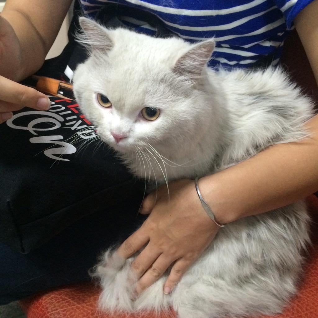 으아 큰일났다. 이대역-아현역 사이에서 고양이를 주웠어요 정처없이 헤매는데 만져보니 털이 잔뜩 엉겨있고. 근처 동물병원(월드펫) 문닫아서 파출소 갔더니 센터로 넘긴다해서 일단 집에 데려왔어요. 잃어버리신분? http://t.co/DGu5zNHZrP