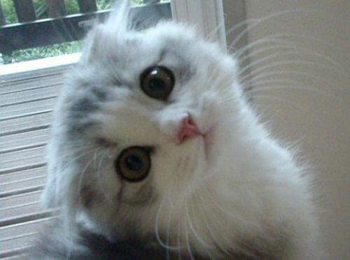 (*´ω`*)  QT @zuxydyzubabu: 猫ちゃんの画像にいやされたらRTしてね(=´∇`=) https://t.co/6d1FT7vvHf