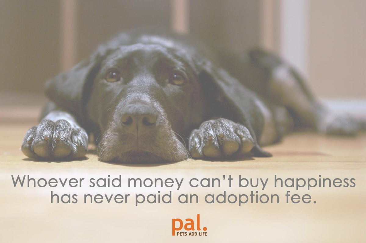 Reply if you've paid an adoption fee and RT if you agree! http://t.co/ANdgX24f9w