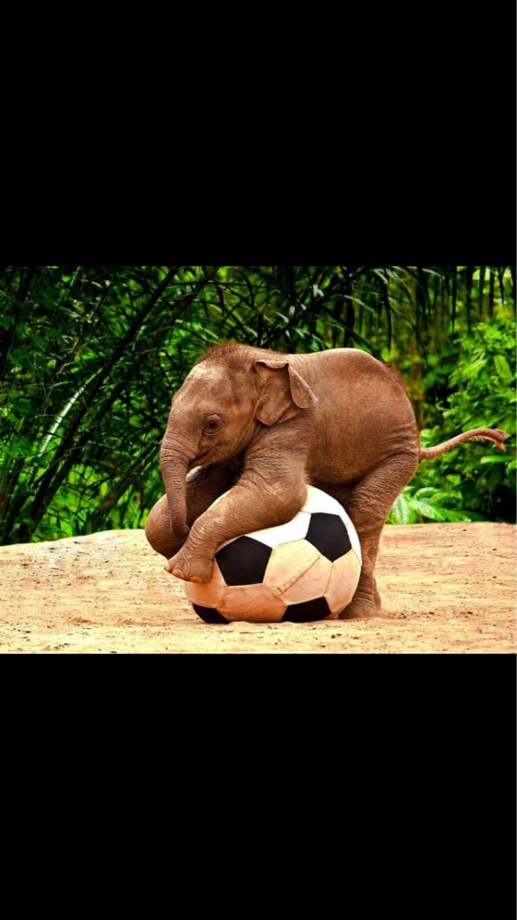 Today is #WorldElephantDay The most beautiful, majestic creature. Sadly one of the most POACHED animals in the world! http://t.co/GMqUz1Cx2L