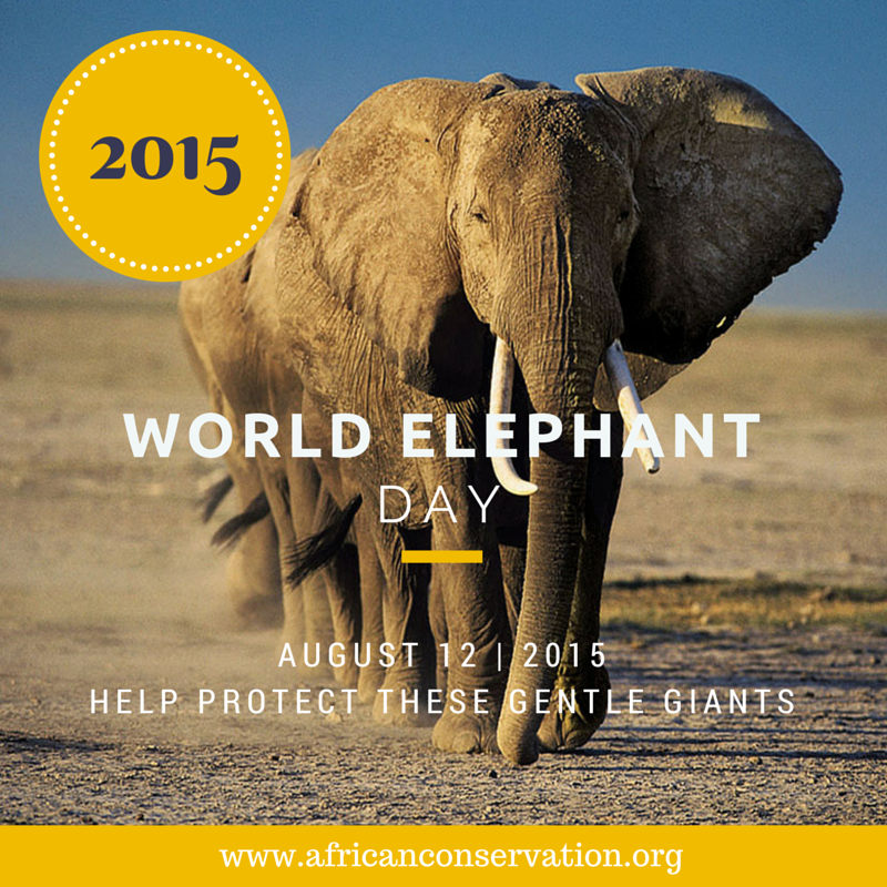RT @AfricanConserve: Today is #WorldElephantDay!!! Will you help save Mount Cameroon's 178 #elephants? https://t.co/fKAAh7ciiR http://t.co/…