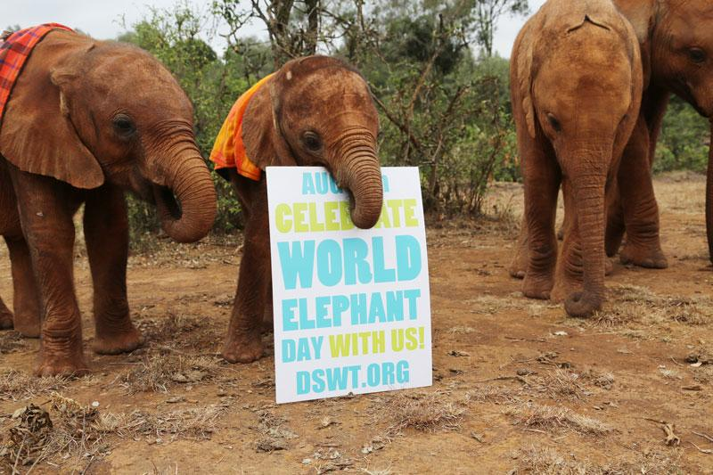 #WorldElephantDay top ways to help: foster an #Elephant at http://t.co/m5uIVwzt7Z or join our @IworryTrade campaign http://t.co/PcHc459NIX