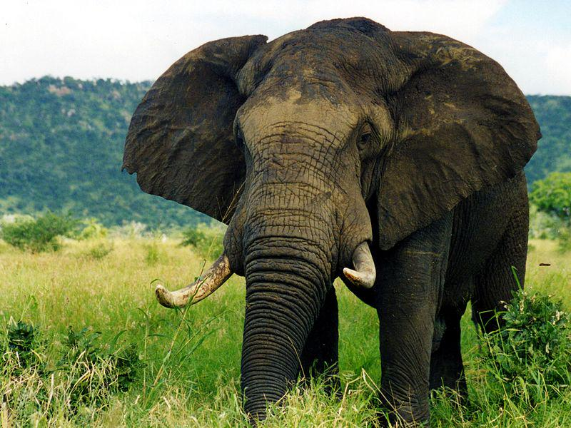 It's #WorldElephantDay! Read about what we're doing to fight against wildlife trafficking: http://t.co/byh1uW03F1 http://t.co/Ahiu5Lsw1E
