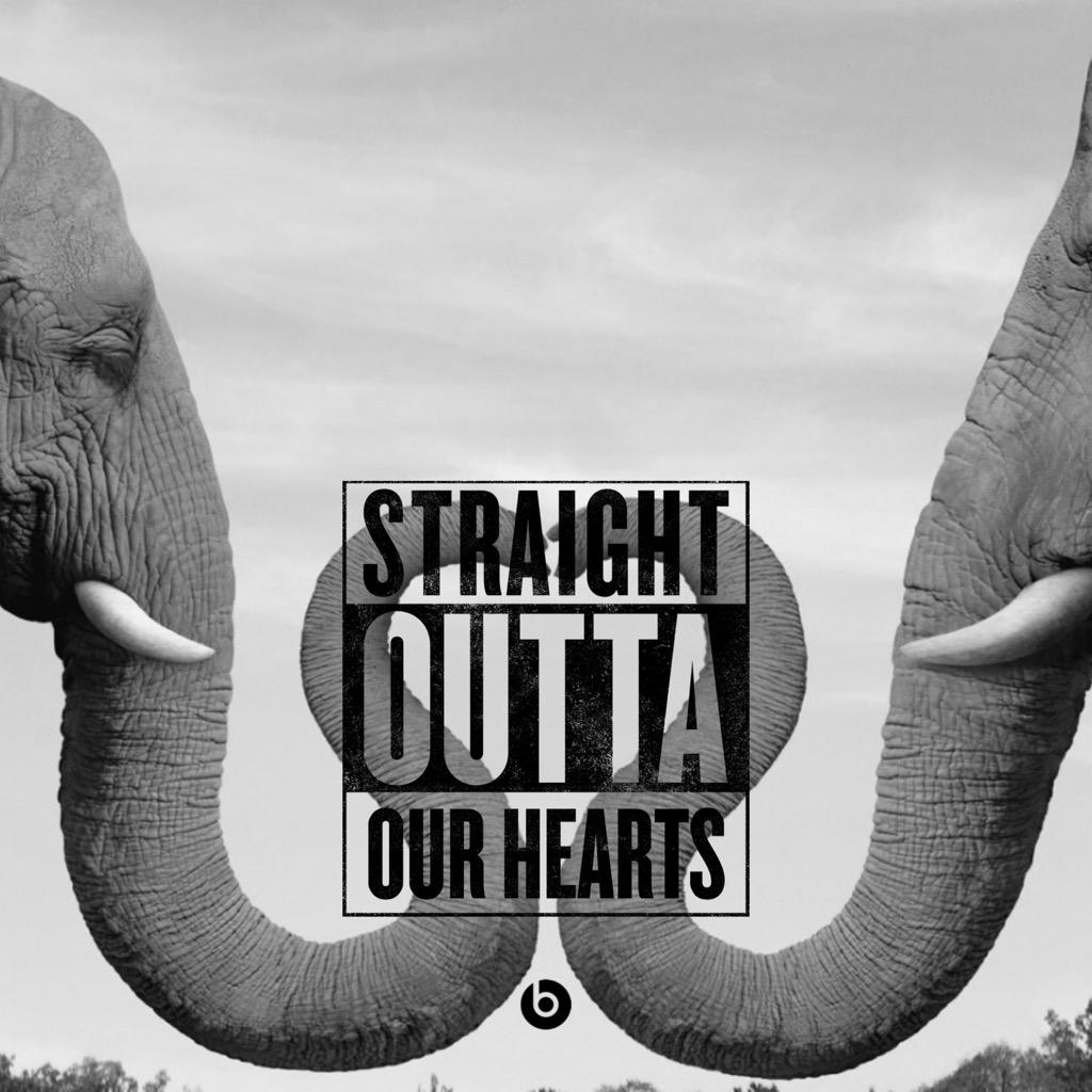 #WorldElephantDay  Stop the cruelty  End the Ivory Trade #Peace http://t.co/GvbcPleyHD