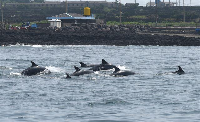 RT @Dolphin_Project: Korea: Two Captive Dolphins Find Freedom and Rejoin Their Family https://t.co/PM8O1agrvV #DolphinProject http://t.co/l…