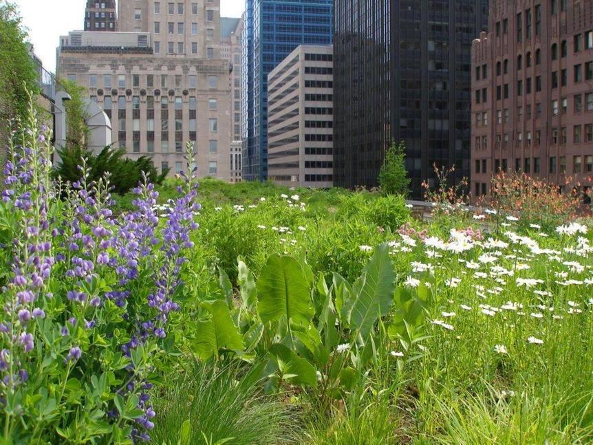 Meer #natuur in de stad, hoe stimuleren we dat? Oa. door b(l)oeiende voorbeelden van #groenedaken te delen. @urgenda http://t.co/YEUHkhKFwf