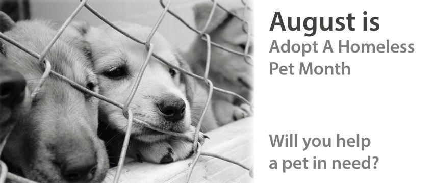 August is Adopt a Homeless Pet Month! https://t.co/k4aAXeVbrX http://t.co/Z9llucBvPo