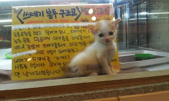 커피타는 고양이를 지켜주세요 (1화) 쓰레기봉투에 버려졌던 아기 고양이  7남매를 구조하다   뉴스펀딩 http://t.co/rxU1sHXBIA http://t.co/9QDGM0wKQU
