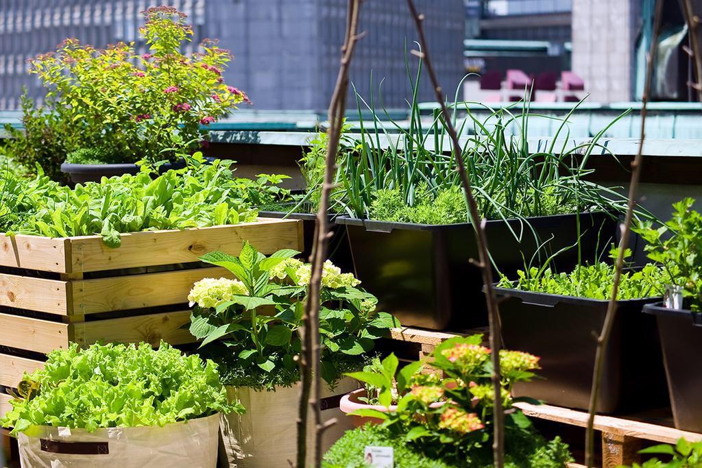 #Stadslandbouwers kunnen het dak op.... @Kiemkracht @Tekenjetuin @RonnieAmsterdam  @Groen010 #stadslandbouw http://t.co/oz7fEJiY3X