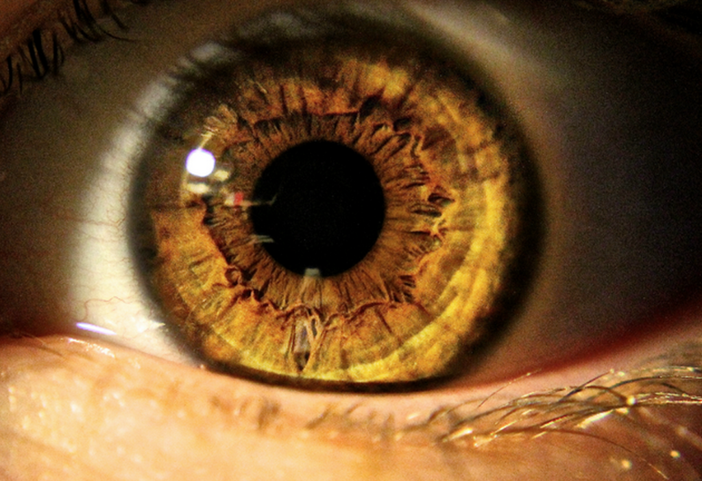 RT @hitRECord  Anyone into macro photography? http://t.co/fpWIy1hDew #LensProject http://t.co/UoH0kTLfXh