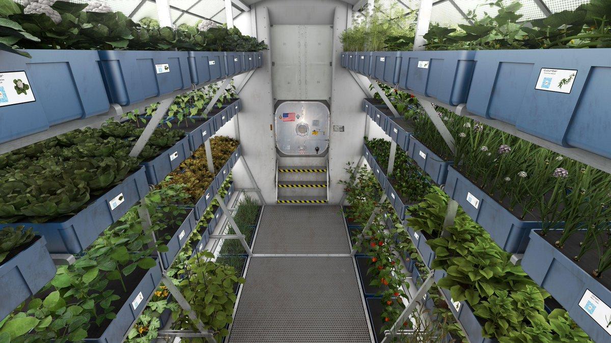 【写真フォト】国際宇宙ステーション内の植物工場にて初めてレタスを収穫・試食(写真:NASAより) http://t.co/184U0M3o2u http://t.co/CxycC6ntPU