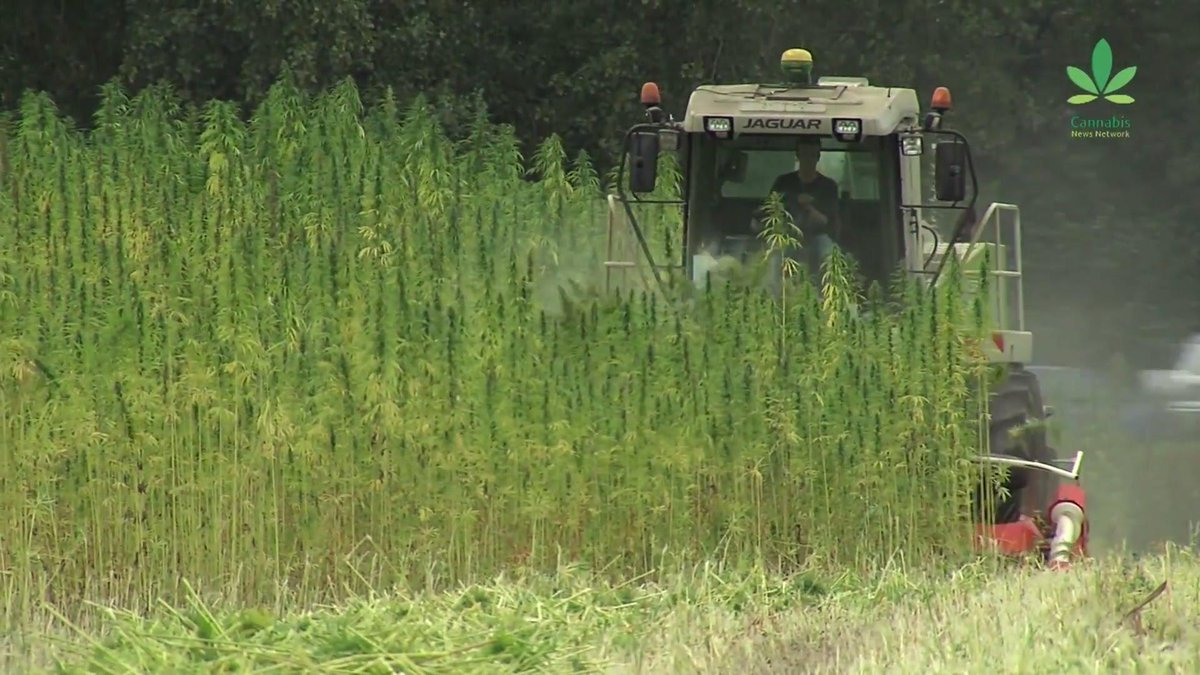 Why aren't we building more with #hemp? Watch part 2 of our report: http://t.co/XHBCdtgd8G #mmot http://t.co/mS7fKsitVE