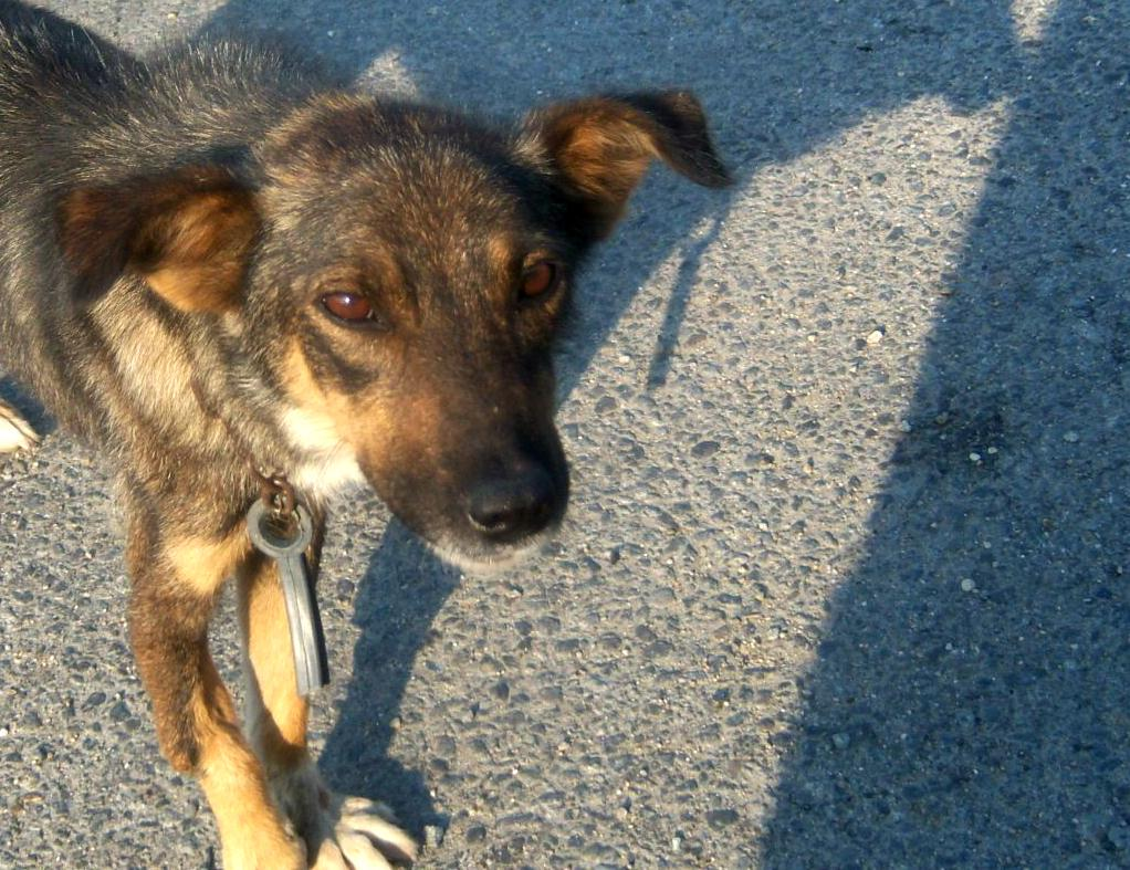 PL view @leagueofrescue URGENTLY req  #adopter 4 #dog with broken leg Abused,Escaped Chained leagueofrescue@gmail.com http://t.co/ifnioVM3Ry