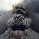 My dog plays PS4 with me...booyah!!!