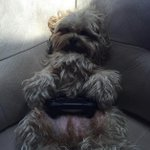 …Technically he isn't my dog but whoever's dog he is…I want him!!! #PS4