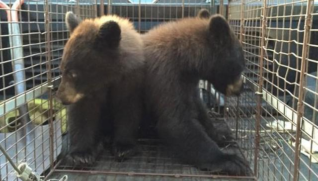 RT @dodo: Orphaned bear cubs found still clinging to their dead mother http://t.co/ChVEqwvcVf http://t.co/ULnj6xmkuj