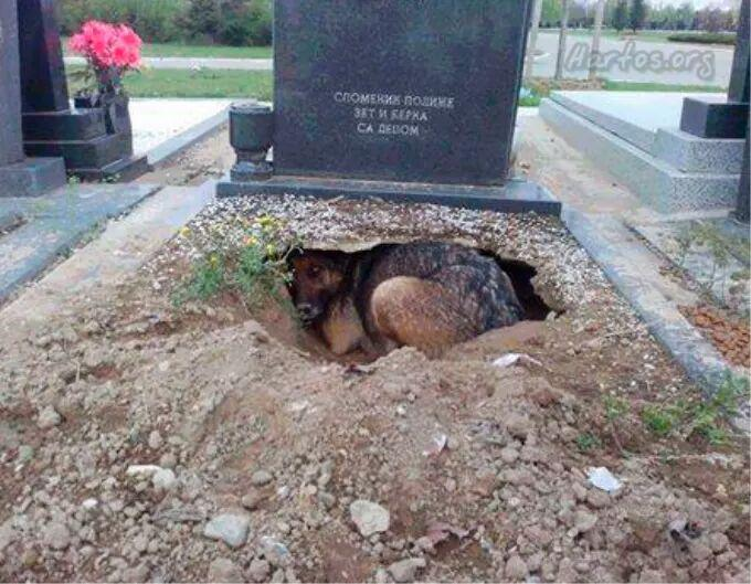 Unless you've experienced the unconditional love of a dog, you will never understand. This dogs owner had just died. http://t.co/WiuxxkCsbV