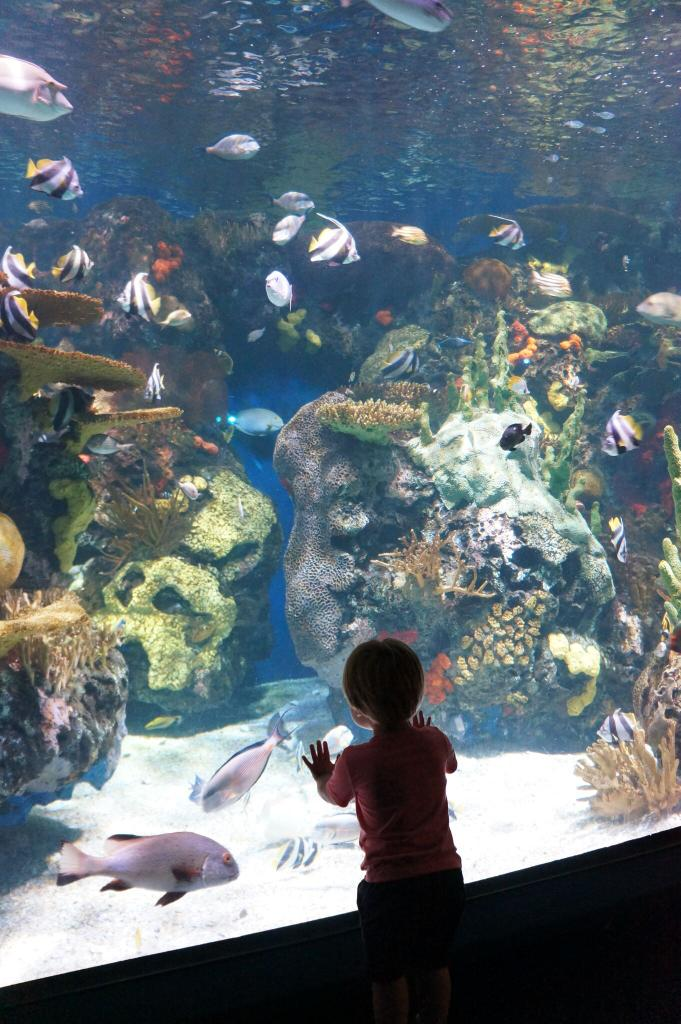 How cool is this pic!?  My son Jack, first time at an aquarium and amazed.  Awesome moment. #littlelegend http://t.co/c92uHxPSDM