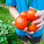 Learn how @ItalianHome is using #urban #gardening to learn: http://t.co/Au19mQvcMU #Boston @universalhub #education http://t.co/F6kLbNVbUN