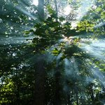 Drie biljoen bomen op aarde - http://t.co/Z5c5SzMqZG #nieuws #wetenschap http://t.co/kx8cj6XkyC