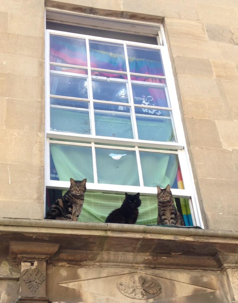Just a walked past three beautiful cats sat on a windowsill on my way to work, yet another reason @WeLoveBath http://t.co/jJ7Qd4DW5l
