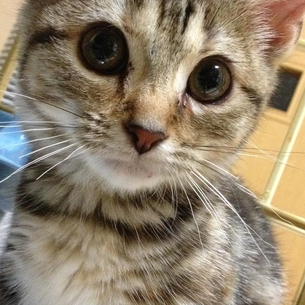 #繋がらなくていいから俺の猫を見てくれ よしきた http://t.co/5xQXr44yi8