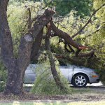 Need help with storm clean up in #Phoenix? Call 602-534-222 http://t.co/8hRSJ98xID http://t.co/WJfPm7BMPW