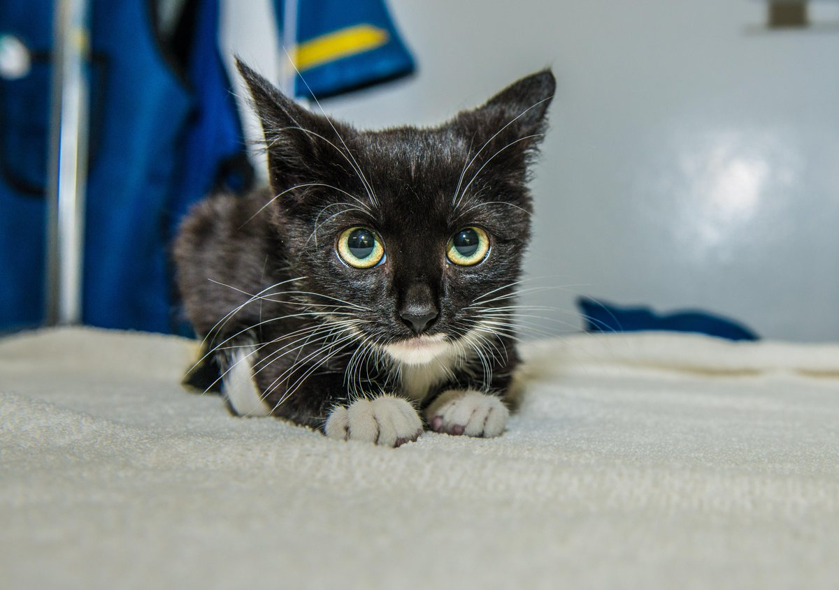 You guys! This is Waffles http://t.co/AwQWLDFHee #adoptakitten #nyc http://t.co/6r5TExiy9b