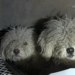 GOING VIRAL: Team rescues 2 bonded poodles struggling to survive under #5Freeway. Watch: http://t.co/O0Pdnr90uf. http://t.co/XyIgAvywUV