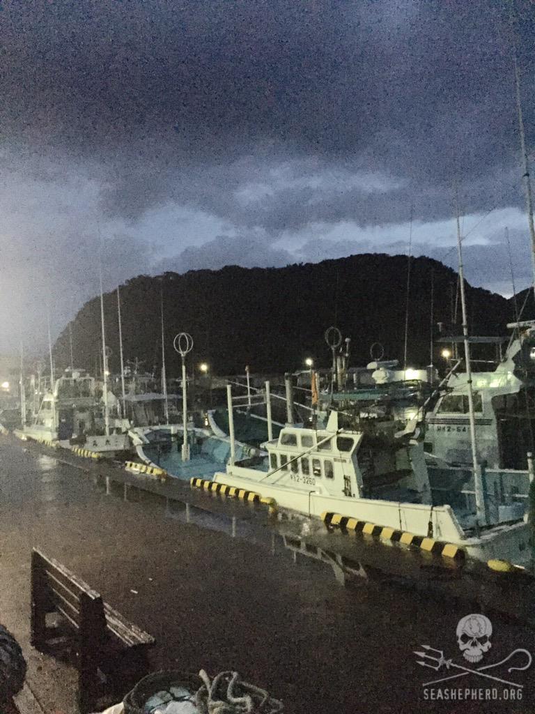 RT @CoveGuardians: Blue Cove day #2. Batting 1000 for the season! #Tweet4Taiji #OpHenkaku http://t.co/KaZOZwEotR