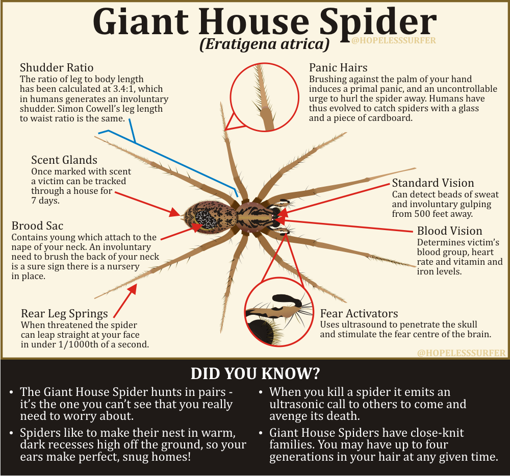 The anatomy of a giant house spider (by @hopelesssurfer) - scoopnest.com